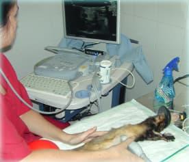 centro veterinario los sauces ecografia