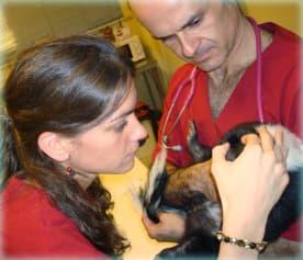 centro_ veterinario_ los_ sauces_ consulta