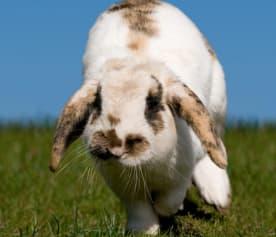 cvsauces_conejo_hierba2