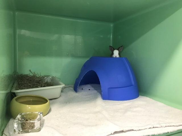 guarderia y residencia de vacaciones para conejos los sauces2