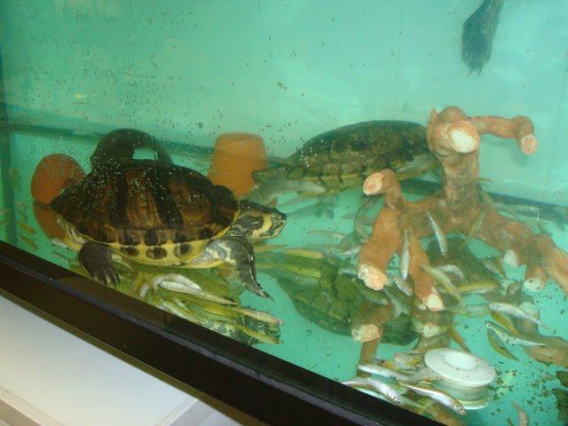 guarderia y residencia de vacaciones reptiles