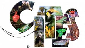 logo-cites-300x169