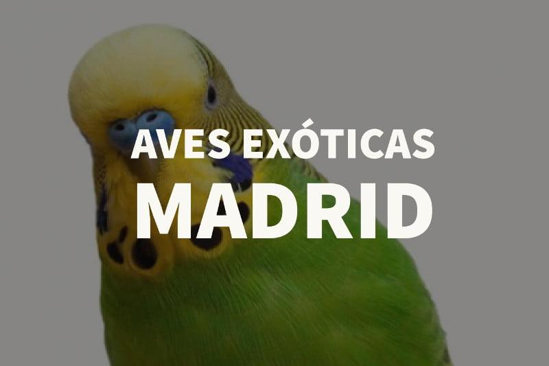 Aves exóticas Madrid
