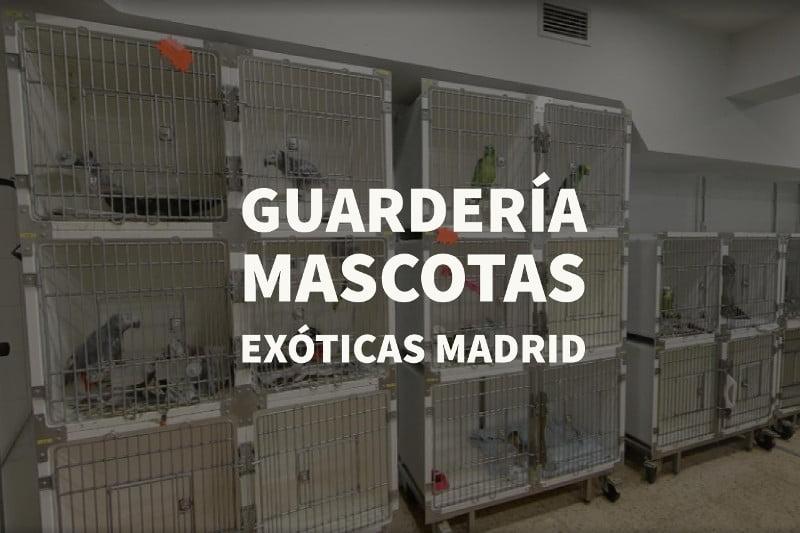 guarderia mascotas exoticas madrid