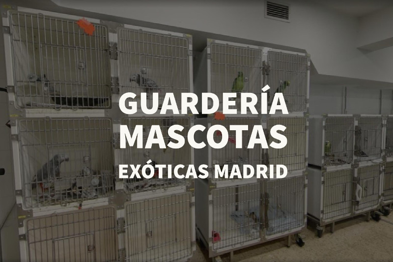guarderia mascotas exoticas madrid