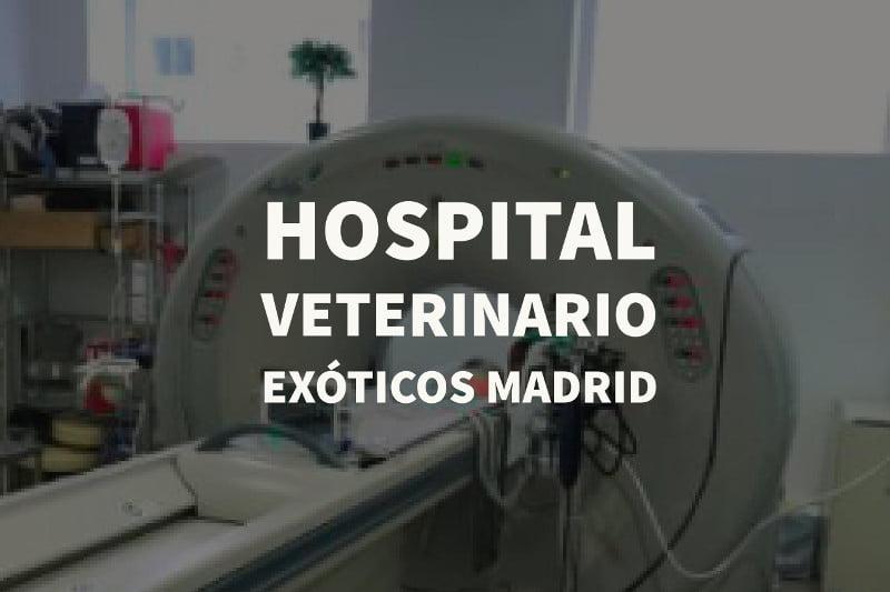 hospital veterinario exoticos madrid