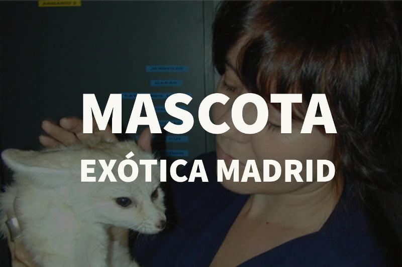 mascota exotica madrid