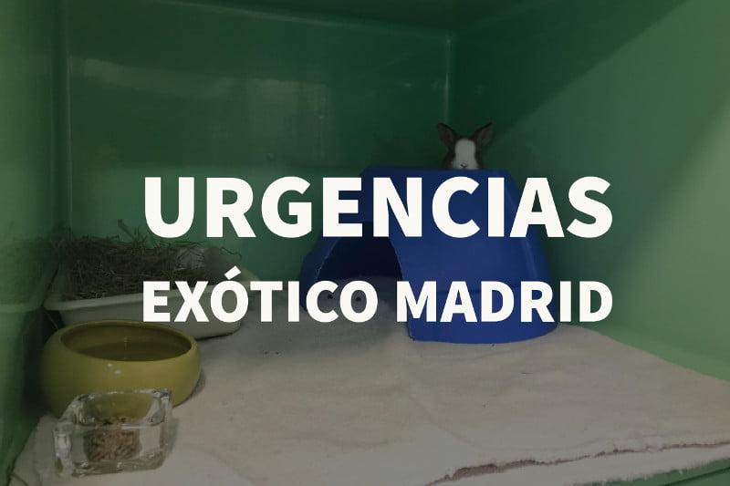 Urgencias exótico Madrid