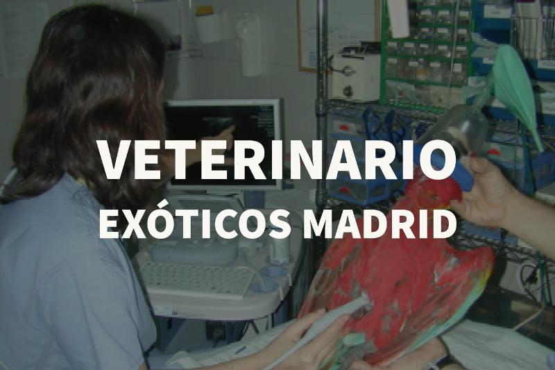 veterinario exoticos madrid
