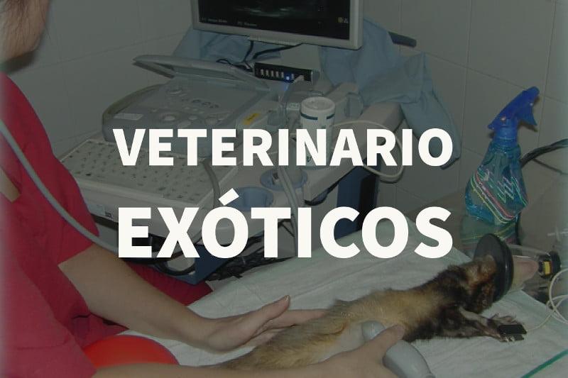 veterinario exoticos