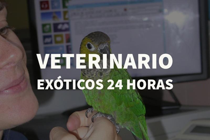 veterinario exoticos 24 horas