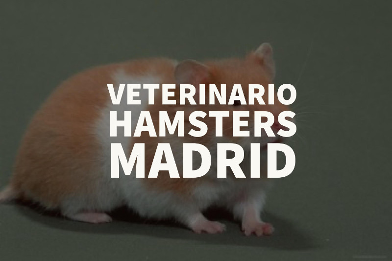 veterinario hamsters madrid