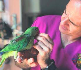 urgencias 24h animales exoticos